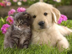 Puppy and Kitten on the Grass